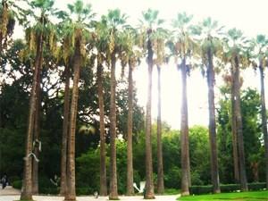 National Garten