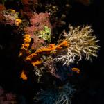 Unterwasser-Flora und -Fauna.