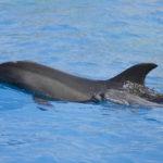 Delfin Attika Zoo