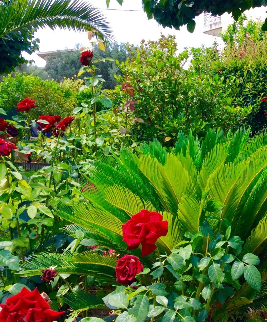 Blumen Garten Sonne Egio Selianitika Peloponnes Griechenland