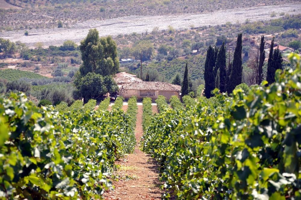 Wein, Weinlese, Griechenland, Oinoxeneia