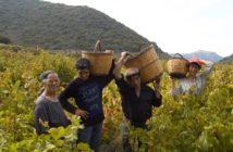 Wein, Winzerei, Griechenland